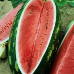แตงโมคองโก - Congo Watermelon