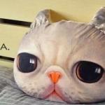 หมอนแมว (Cat Head Pillow) ลายA