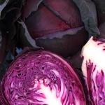 กะหล่ำปลีสีม่วง - Mammoth Red Rock Cabbage
