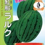 แตงโมไฮโกเซนลาร์ค - Hikohsen Larc Watermelon (พรีออเดอร์)