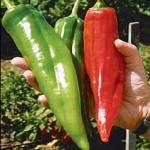 พริกบิ๊กจิม - Big Jim Pepper (ผลใหญ่ที่สุดในโลก)