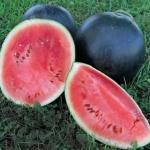 แตงโมฟลอริด้าไจแอ้นท์ - Florida Giant Watermelon