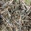 หญ้าอัลฟ่าฟา, Alfalfa Hay thumbnail 3