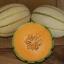 เมล่อนทัสคานี่ - Tuscany Melon thumbnail 1