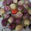 พริกเชอรี่จีนประดับ - Chinese Cherry Ornamental Pepper thumbnail 3