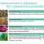 Sena Marine Plankton Water Serum Concentrate 150mL น้ำตบ Plankton สัญชาติเกาหลี ให้ความเนียนนุ่ม เบาสบายกับผิวหน้า ผิวหน้าเต่งตึง อุดมด้วยสารธรรมชาติ thumbnail 3