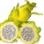 กิ่งแก้วมังกรอิสราเอลสีเหลือง - Hylocereus undatus thumbnail 3