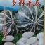 ฟักทองญี่ปุ่นลาย - Striped Japanese Pumpkin thumbnail 1