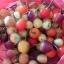 พริกเชอรี่จีนประดับ - Chinese Cherry Ornamental Pepper thumbnail 2