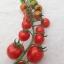 มะเขือเทศราพันเซล F1 - Rapunzel Tomato F1 thumbnail 4