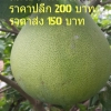 ส้มโอไร้เมล็ดไต้หวัน