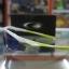 แว่นตา OAKLEY FINGERPRINT COLLECTION M2 ขาว-เขียว thumbnail 3