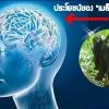 """ประโยชน์ของ""""เมล็ดหมามุ่ยอินเดีย""""ที่มีต่อสมอง"""