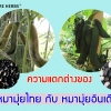 ความแตกต่างของ >>>>หมามุ่ยไทย กัย หมามุ่ยอินเดีย