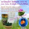 Helathy Life Milk Thistle 1000 mg ขนาด 150 Capsules สมุนไพรดีท็อกและบำรุงตับ และลำไส้ ช่วยฟื้นฟูตับ เพิ่มปริมาณ Glutathione ต้านอนุมูลอิสระ