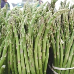 Jersey Knight Asparagus (หน่อไม้ฝรั่งนิวเจอร์ซี่ย์)