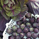 Rubine Brussels Sprouts (กะหล่ำดาวสีม่วง)