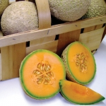 Sugar Cube Melon (ซูก้าส์ คูป เมล่อน)