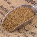 Alfalfa Seed (เมล็ดอัลฟ่า)