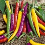 Cayenne Blend Pepper - พริกคานาเยนต์แฟนซี