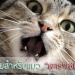 """อันตรายสำหรับแมว """"พาราเซตามอล"""""""