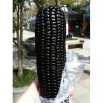 Black Corn (ข้าวโพดสีดำ)