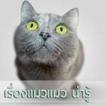 5 เรื่องแมวแมว น่ารู้