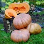 Fairytale Pumpkin (ฟักทองแฟรีเทล)