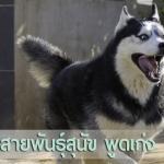 15 สายพันธุ์สุนัข พูดเก่ง
