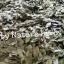 ใบทุเรียนเทศแห้ง Graviola Air Dried Soursop Leaves ขนาด 250 กรัม thumbnail 6