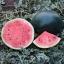 Ruby Watermelon (แตงโมรูบี้ จัมโบ้)