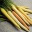 Rainbow Carrots (แครอทเรนโบลว์)