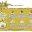 พร้อมส่ง ** The GOLD Hunter ชุดขุดทองและหินล้ำค่า (ทานไม่ได้) thumbnail 2