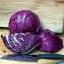 Ruby Ball Cabbage (กะหล่ำปลี รูบี้ม่วง)