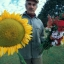Giant Sun Flower (ทานตะวันยักษ์)