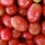 Queen Tomato (มะเขือเทศราชินี)