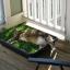 Cat Grass (หญ้าแมว แคปนิท)