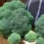 Belstar Broccoli (เบลสตาร์ บล็อคโคลี่ย์)