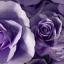 ดอกไม้กระดาษโทนสีม่วง - flower paper backdrop thumbnail 1