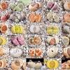 LITHOPS - mix (20 seeds)
