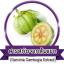 Phyteney ไฟทินี่ ผลิตภัณฑ์ ลดน้ำหนัก ลดความอ้วน ตัวช่วยควบคุมน้ำหนัก thumbnail 10