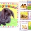 หนังสือผ้า Baby Bunny by Priddy Books thumbnail 1