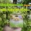 Gold ginseng lemon uv white perfect spf 50 (เดย์ครีม) thumbnail 1