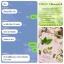 Colly Chlorophyll Plus Fiber คอลลี่ คลอโรฟิลล์ พลัส ไฟเบอร์ thumbnail 4