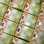 สบู่โสมมะนาวทองคำ Gold Ginseng Lemon Facial Soap by jeezz thumbnail 3