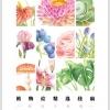 กระดาษดราฟร่างเบา แบบฝึกหัดภาพระบายสี ภาพดอกไม้