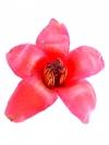 ดอกงิ้วแห้ง (Red Cotton Flower)