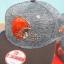 หมวก NFL Draft 2016 New Era Cleveland Browns (Snapback) thumbnail 7