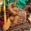 ช้างมงคลนำก้อนท้อง thumbnail 2