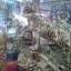 เสือมงคลคู่อวยพรบนยู่อี่นำโชค เสริมพลังอำนาจ thumbnail 3